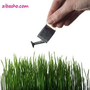 grow green grass by Mabhongo Copy Optimized  سبز کردن سبزه نوروز