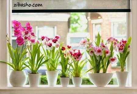 photo 2016 02 01 13 12 41 کدام گلدان برای دکوراسیون منزل شما مناسب است؟!